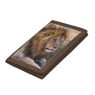Lion Maasai Mara National Reserve, Kenya Tri-fold Wallets