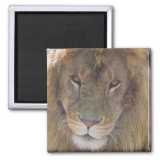Lion Refrigerator Magnets