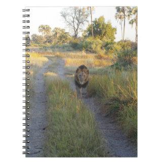 LION MALE 17 JOURNAL