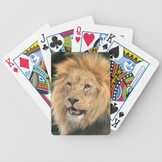 Lion male head beautiful photo portrait, gift bicycle playing cards