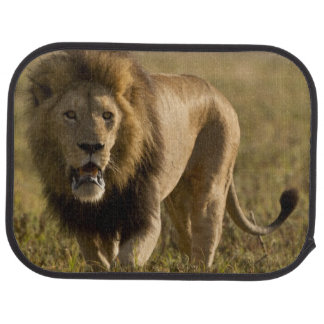 Lion male hunting car mat