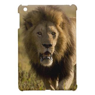 Lion male hunting iPad mini case