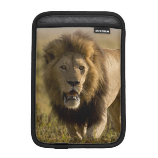 Lion male hunting iPad mini sleeve