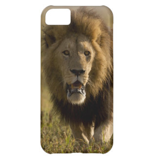 Lion male hunting iPhone 5C case