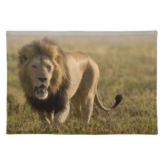Lion male hunting placemat