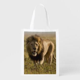 Lion male hunting reusable grocery bag
