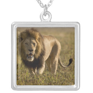 Lion male hunting silver plated necklace