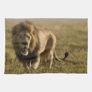 Lion male hunting tea towel