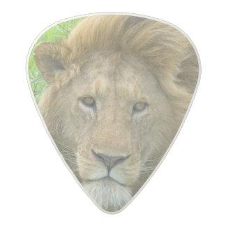Lion Male Portrait, East Africa, Tanzania, Acetal Guitar Pick