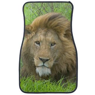 Lion Male Portrait, East Africa, Tanzania, Car Mat
