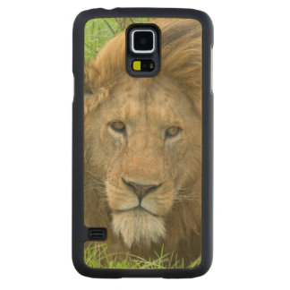 Lion Male Portrait, East Africa, Tanzania, Carved Maple Galaxy S5 Case