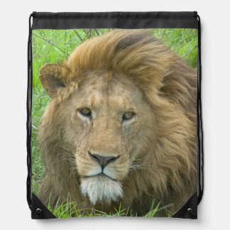 Lion Male Portrait, East Africa, Tanzania, Drawstring Bag