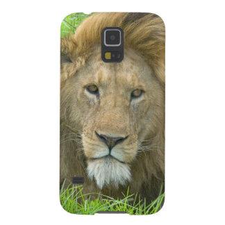 Lion Male Portrait, East Africa, Tanzania, Galaxy S5 Case