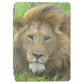 Lion Male Portrait, East Africa, Tanzania, iPad Air Cover