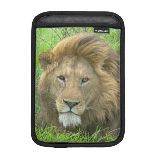 Lion Male Portrait, East Africa, Tanzania, iPad Mini Sleeve