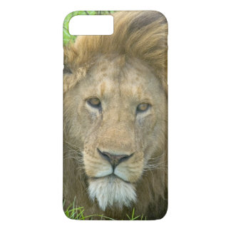 Lion Male Portrait, East Africa, Tanzania, iPhone 8 Plus/7 Plus Case