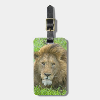Lion Male Portrait, East Africa, Tanzania, Luggage Tag