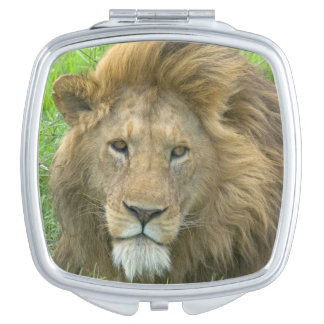 Lion Male Portrait, East Africa, Tanzania, Makeup Mirror
