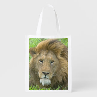 Lion Male Portrait, East Africa, Tanzania, Reusable Grocery Bag