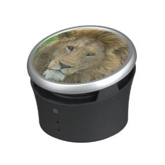 Lion Male Portrait, East Africa, Tanzania, Speaker