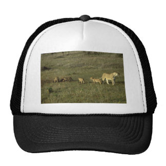 LION MOTHER AND CUBS HATS