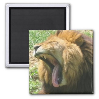 lion mouth square magnet