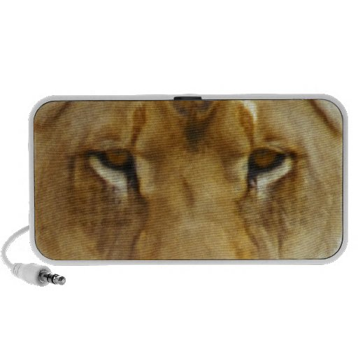 Lion on a rock looking at camera travelling speakers