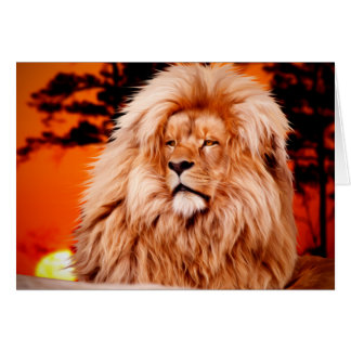Lion Orange African Sky Photo Paint Card