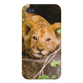 Lion (Panthera Leo) Cub In Cave, Maasai Mara iPhone 4 Cover