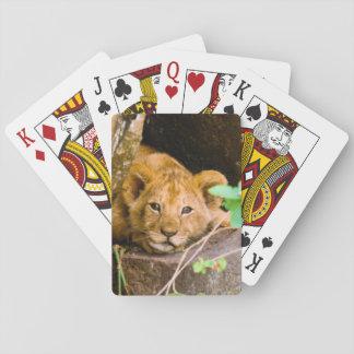 Lion (Panthera Leo) Cub In Cave, Maasai Mara Playing Cards