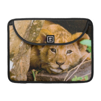 Lion (Panthera Leo) Cub In Cave, Maasai Mara Sleeve For MacBook Pro