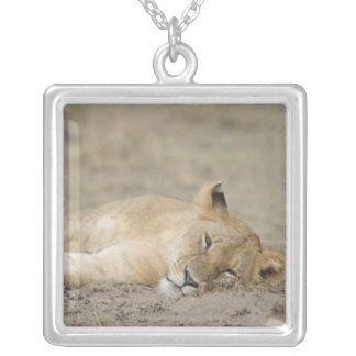 Lion (Panthera leo) cub resting, Masai Mara Game Silver Plated Necklace