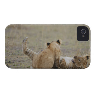Lion (Panthera leo) cubs playing in grass, Masai Case-Mate iPhone 4 Case