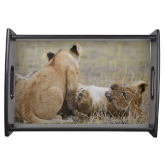 Lion (Panthera leo) cubs playing in grass, Masai Serving Tray