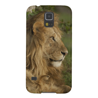 Lion, Panthera leo, Lower Mara, Masai Mara GR, Galaxy S5 Cases
