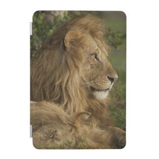 Lion, Panthera leo, Lower Mara, Masai Mara GR, iPad Mini Cover