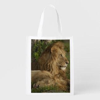 Lion, Panthera leo, Lower Mara, Masai Mara GR, Reusable Grocery Bag