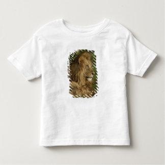 Lion, Panthera leo, Lower Mara, Masai Mara GR, T Shirts