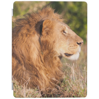 Lion (Panthera Leo) Maasai Mara, Kenya, Africa iPad Cover