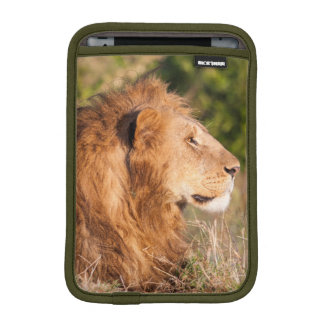 Lion (Panthera Leo) Maasai Mara, Kenya, Africa iPad Mini Sleeve