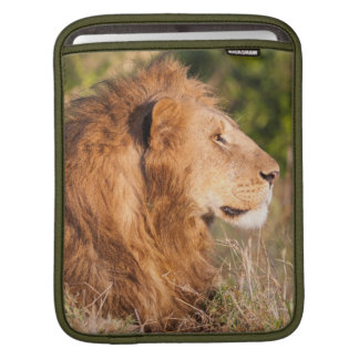 Lion (Panthera Leo) Maasai Mara, Kenya, Africa iPad Sleeve