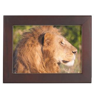 Lion (Panthera Leo) Maasai Mara, Kenya, Africa Keepsake Box