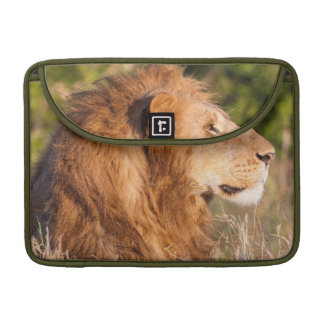 Lion (Panthera Leo) Maasai Mara, Kenya, Africa Sleeve For MacBook Pro