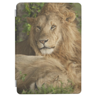 Lion, Panthera leo, males resting iPad Air Cover
