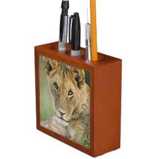 Lion, Panthera leo, Masai Mara, Kenya Desk Organiser