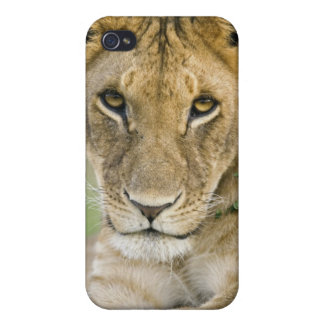 Lion, Panthera leo, Masai Mara, Kenya iPhone 4 Cover