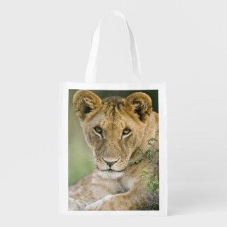 Lion, Panthera leo, Masai Mara, Kenya Reusable Grocery Bag