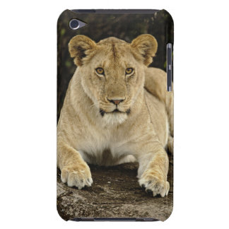 Lion, Panthera leo, Serengeti National Park, Barely There iPod Covers