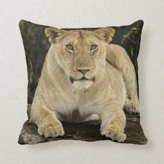 Lion Panthera leo Serengeti National Park Pillow