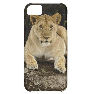 Lion, Panthera leo, Serengeti National Park, iPhone 5C Case